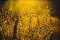 Картинка трава, свет, природа, забор