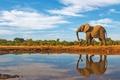 Картинка water, elephant, savannah, mammal