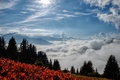 Картинка Autumn, Fog, Nebel