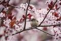 Картинка дерево, ветка, весна, птичка, цветение