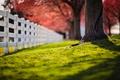 Картинка трава, дерево, забор