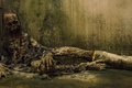Картинка фон, зомби, The Walking Dead, Ходячие мертвецы