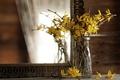 Картинка ветки, отражение, зеркало, цветки, Форсайтия