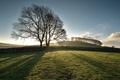 Картинка дерево, утро, поле