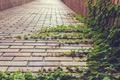 Картинка листья, улица, растение, зеленые, плющ