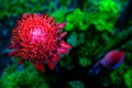 Картинка цветок, яркий, лепестки, георгина, макро. природа