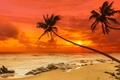 Картинка песок, море, пляж, закат, пальмы, берег, beach