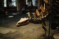 Картинка динозавр, кости, скелет