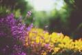 Картинка цветы, растения, желтые, лепестки, сиреневые