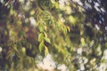 Картинка листья, дерево, боке
