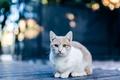 Картинка кошка, кот, смотрит
