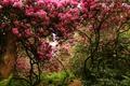 Картинка деревья, парк, Швейцария, кусты, цветущие, Park Seleger Moor