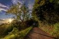 Картинка дорога, небо, трава, облака, деревья, горы, лучи солнца
