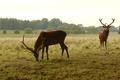 Картинка лес, трава, деревья, природа, олень, рога