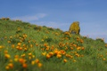 Картинка лето, небо, цветы, поле