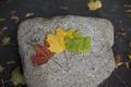 Картинка листья, желтый, красный, зеленый, камень, клен, разные