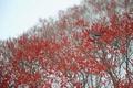 Картинка ягоды, дерево, птица