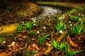 Картинка ландыши, весна, ручей, цветы, листья