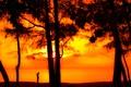 Картинка солнце, лучи, деревья, закат, берег, вечер, мальчик