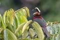Картинка природа, муха, птица