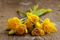 Картинка цветы, доски, весна, нарциссы