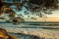 Картинка море, волны, облака, закат, ветки, дерево, берег