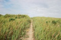 Картинка небо, трава, голубое, дорожка, тропинка