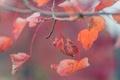 Картинка осень, листья, красные, листочки