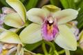 Картинка макро, лепестки, орхидеи, экзотика