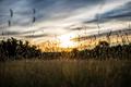 Картинка поле, трава, утро