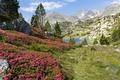 Картинка трава, деревья, цветы, горы, озеро, камни, Франция