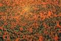 Картинка деревья, краски, Австралия, Квинсленд