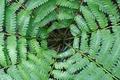 Картинка листья, растение, Канада, папоротник