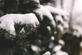Картинка снег, иголки, дерево, елка
