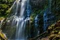 Картинка листья, деревья, природа, водопад, мох, красиво