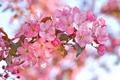 Картинка ветка, весна, лепестки, сад