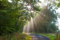 Картинка лес, деревья, парк, Германия, лучи солнца, тропинка, Monreal