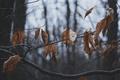 Картинка осень, листья, ветки, дерево, сухие