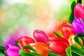 Картинка яркие, рисунок, тюльпаны, бутоны
