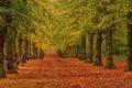 Картинка дорога, осень, листья, деревья, парк, аллея