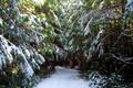 Картинка зима, лес, снег, деревья, Канада, Ucluelet