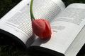 Картинка тюльпан, весна, книга