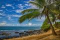 Картинка море, тропики, пальма, океан, берег