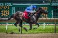 Картинка конь, гонка, спорт