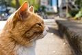 Картинка кот, усы, фон, профиль