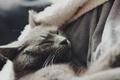 Картинка кот, шерсть, спит