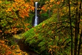 Картинка осень, лес, деревья, водопад, США, Silver Falls State Park