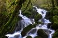 Картинка зелень, лес, ручей, камни, течение, мох, Швейцария