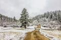 Картинка дорога, снег, природа