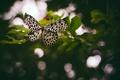 Картинка бабочка, крылышки, боке